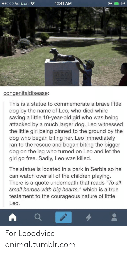 "Brave Little: 00000 Verizon ?  12:41 AM  AEO  C8ARD  congenitaldisease:  This is a statue to commemorate a brave little  dog by the name of Leo, who died while  saving a little 10-year-old girl who was being  attacked by a much larger dog. Leo witnessed  the little girl being pinned to the ground by the  dog who began biting her. Leo immediately  ran to the rescue and began biting the bigger  dog on the leg who turned on Leo and let the  girl go free. Sadly, Leo was killed.  The statue is located in a park in Serbia so he  can watch over all of the children playing.  There is a quote underneath that reads ""To all  small heroes with big hearts,"" which is a true  testament to the courageous nature of little  Leo. For Leoadvice-animal.tumblr.com"
