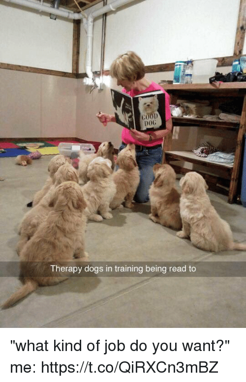 "Dogs, Girl Memes, and Job: 00D  00G  Therapy dogs in training being read to ""what kind of job do you want?""  me: https://t.co/QiRXCn3mBZ"
