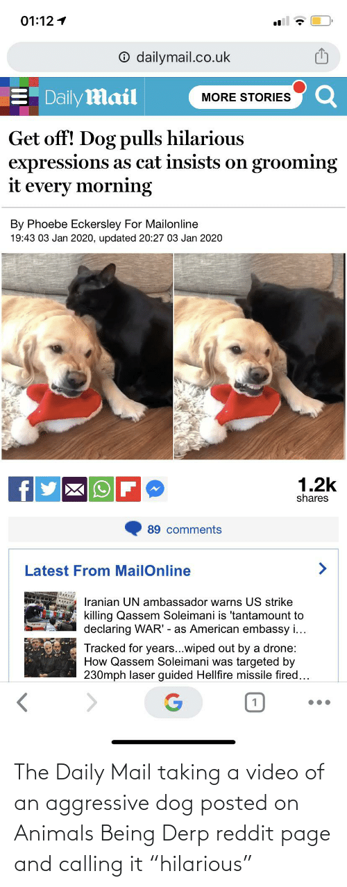 """dailymail.co.uk: 01:12 1  O dailymail.co.uk  Daily Mail  MORE STORIES  Get off! Dog pulls hilarious  expressions as cat insists on grooming  it  every morning  By Phoebe Eckersley For Mailonline  19:43 03 Jan 2020, updated 20:27 03 Jan 2020  1.2k  shares  89 comments  Latest From MailOnline  Iranian UN ambassador warns US strike  killing Qassem Soleimani is 'tantamount to  declaring WAR' - as American embassy i...  Tracked for years...wiped out by a drone:  How Qassem Soleimani was targeted by  230mph laser guided Hellfire missile fired... The Daily Mail taking a video of an aggressive dog posted on Animals Being Derp reddit page and calling it """"hilarious"""""""