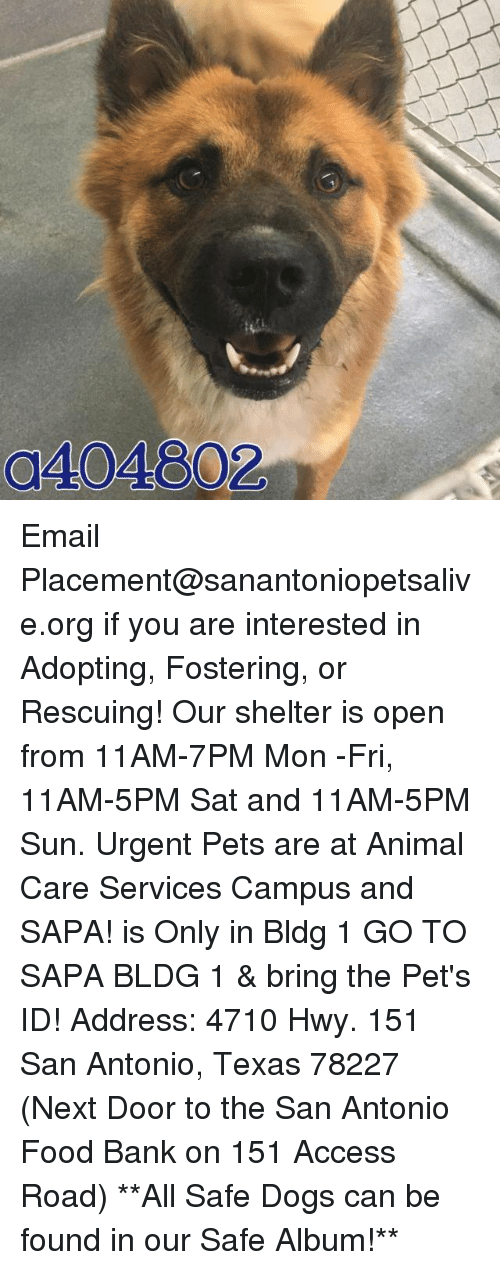memes: 0404802 Email Placement@sanantoniopetsalive.org if you are interested in Adopting, Fostering, or Rescuing!  Our shelter is open from 11AM-7PM Mon -Fri, 11AM-5PM Sat and 11AM-5PM Sun.  Urgent Pets are at Animal Care Services Campus and SAPA! is Only in Bldg 1 GO TO SAPA BLDG 1 & bring the Pet's ID! Address: 4710 Hwy. 151 San Antonio, Texas 78227 (Next Door to the San Antonio Food Bank on 151 Access Road)  **All Safe Dogs can be found in our Safe Album!**