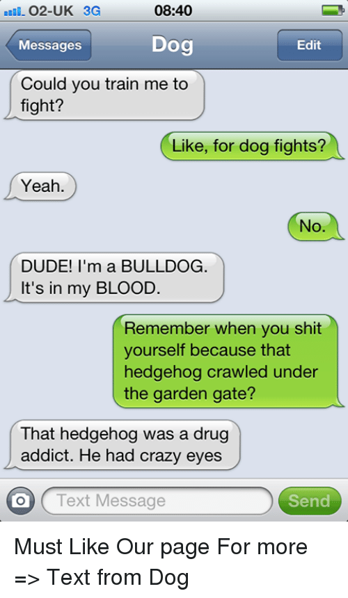 crazy eyes: 08:40  O2-UK 3G  Dog  Messages  Edit  Could you train me to  fight?  Like, for dog fights?  Yeah  No  DUDE! I'm a BULLDOG.  It's in my BLOOD.  Remember when you shit  yourself because that  hedgehog crawled under  the garden gate?  That hedgehog was a drug  addict. He had crazy eyes  on Text Message  Send Must Like Our page For more => Text from Dog