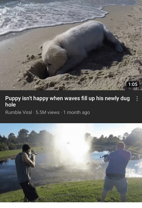 Waves: 1:05  Puppy isn't happy when waves fill up his newly dug  hole  Rumble Viral 5.5M views 1 month ago