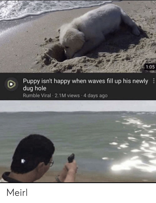 Waves: 1:05  Puppy isn't happy when waves fill up his newly  dug hole  Rumble Viral 2.1M views 4 days ago Meirl