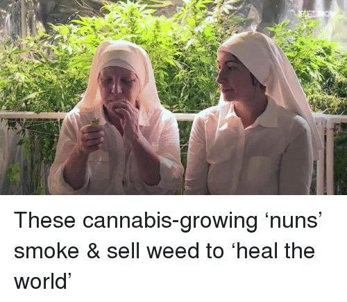 Cannabis: 1,0THE These cannabis-growing 'nuns' smoke & sell weed to 'heal the world'