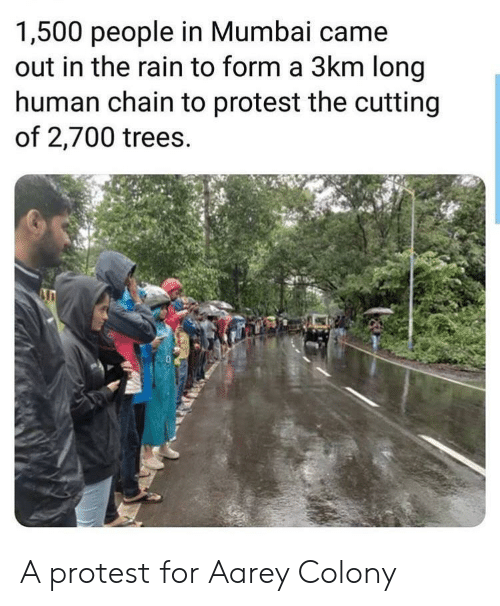 Colony: 1,500 people in Mumbai came  out in the rain to form a 3km long  human chain to protest the cutting  of 2,700 trees. A protest for Aarey Colony