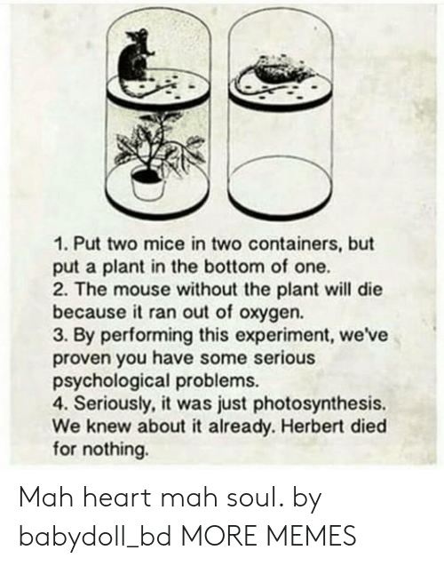 Photosynthesis: 1. Put two mice in two containers, but  put a plant in the bottom of one.  2. The mouse without the plant will die  becauseit ran out of oxygen.  3. By performing this experiment, we've  proven you have some serious  psychological problems.  4. Seriously, it was just photosynthesis.  We knew about it already. Herbert died  for nothing. Mah heart mah soul. by babydoll_bd MORE MEMES