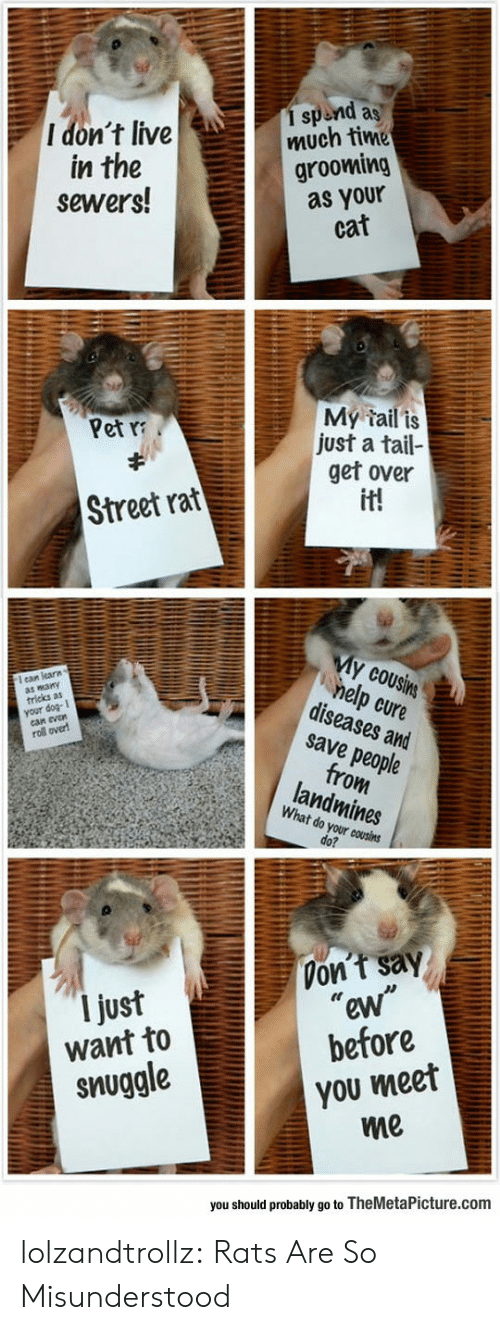 """get over it: 1 spend as  much time  grooming  as your  cat  I don't live  in the  sewers!  My tail is  just a tail-  get over  it!  Pet  Street rat  My cousins  help cure  diseases and  save people  from  landmines  ean learn  wany  tricks as  your  evan  roll over  What do your cousins  do?  Don't say  """"ew""""  before  I just  want to  you meet  me  snuggle  you should probably go to TheMetaPicture.com lolzandtrollz:  Rats Are So Misunderstood"""