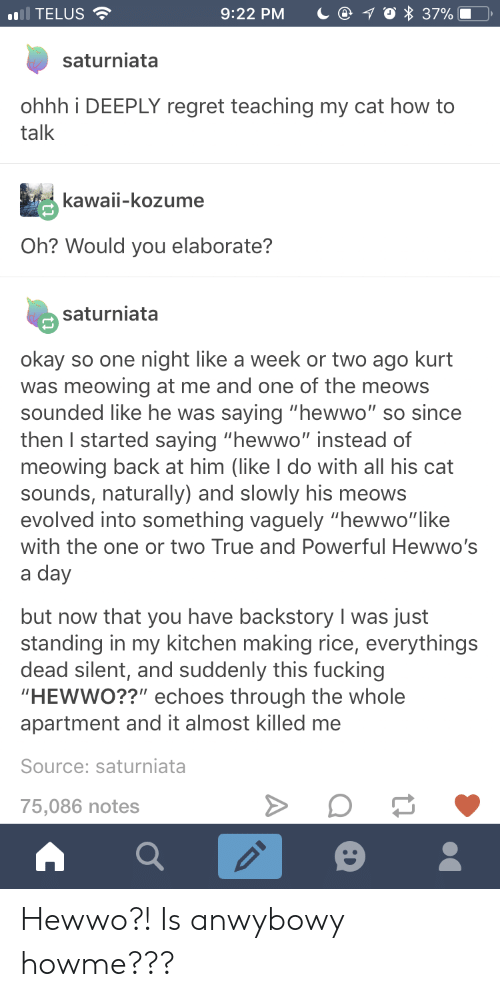 """echoes: ),  .1 TELUS  9:22 PM  37%  saturniata  ohhh i DEEPLY regret teaching my cat how to  talk  kawaii-kozume  Oh? Would you elaborate?  saturniata  okay so one night like a week or two ago kurt  was meowing at me and one of the meows  sounded like he was saying """"hewwo"""" so since  then I started saying """"hewwo"""" instead of  meowing back at him (like I do with all his cat  sounds, naturally) and slowly his meows  evolved into something vaguely """"hewwo""""like  with the one or two True and Powerful Hewwo's  a day  but now that you have backstory I was just  standing in my kitchen making rice, everythings  dead silent, and suddenly this fucking  HEWWO??"""" echoes through the whole  apartment and it almost killed me  Source: saturniata  75,086 notes Hewwo?! Is anwybowy howme???"""