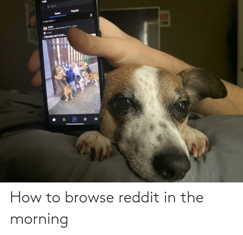 Literally Cant Even: 10:36  Q Search  Popular  Home  EST POSTS Y  vaww  Pested by wBumPrate 6. Sh Lredd  01 Award  I literally can't even.. How to browse reddit in the morning