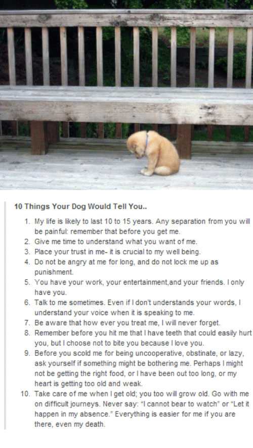 """Understandment: 10 Things Your Dog Would Tell You..  1. My life is likely to last 10 to 15 years. Any separation from you will  be painful: remember that before you get me.  2. Give me time to understand what you want of me.  3. Place your trust in me- it is crucial to my well being.  4. Do not be angry at me for long, and do not lock me up as  punishment.  5. You have your work, your entertainment, and your friends. lonly  have you.  6. Talk to me sometimes. Even if Idon't understands your words, l  understand your voice when it is speaking to me.  7. Be aware that how ever you treat me, l will never forget.  8. Remember before you hit me that l have teeth that could easily hurt  you, but choose not to bite you because l love you.  9. Before you scold me for being uncooperative, obstinate, or lazy,  ask yourself if something might be bothering me. Perhaps l might  not be getting the right food, or l have been out too long, or my  heart is getting too old and weak.  10. Take care of me when get old; you too will grow old. Go with me  on difficult journeys. Never say  cannot bear to watch or """"Let it  happen in my absence. Everything is easier for me if you are  there, even my death."""