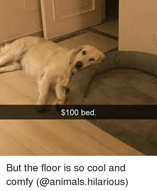 Anaconda, Animals, and Funny: $100 bed. But the floor is so cool and comfy (@animals.hilarious)