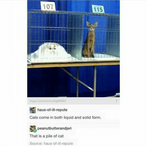 imgure: 101  115  imgur.com/r/unny/EgMIRM2  haus-of-ill-repute  Cats come in both liquid and solid form  peanutbutterandjeri  That is a pile of cat  Source: haus-of-ill-repute