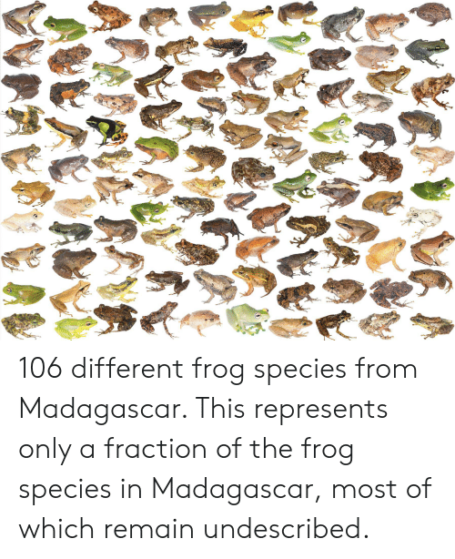 Frog Species: 106 different frog species from Madagascar. This represents only a fraction of the frog species in Madagascar, most of which remain undescribed.