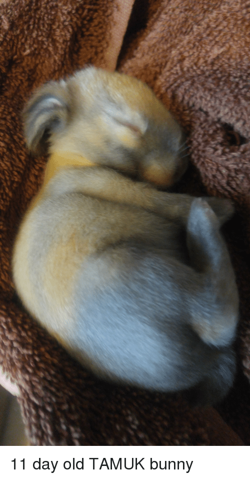 Old, Bunny, and Day: 11 day old TAMUK bunny