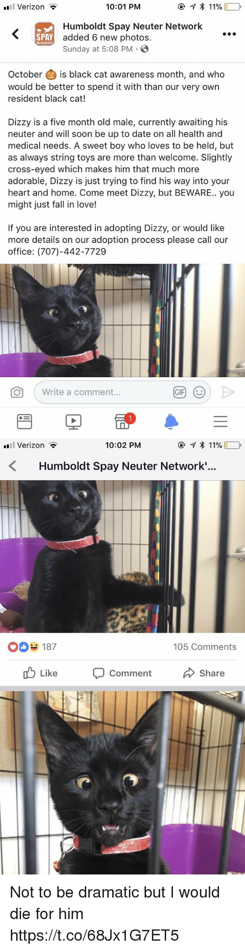 Fall, Love, and Soon...: 11 Verizon  10:01 PM  Humboldt Spay Neuter Network  added 6 new photos.  Sunday at 5:08 PM . S  SPAY  Humboldt  October is black cat awareness month, and who  would be better to spend it with than our very own  resident black cat!  Dizzy is a five month old male, currently awaiting his  neuter and will soon be up to date on all health and  medical needs. A sweet boy who loves to be held, but  as always string toys are more than welcome. Slightly  cross-eyed which makes him that much more  adorable, Dizzy is just trying to find his way into your  heart and home. Come meet Dizzy, but BEWARE.. you  might just fall in love!  If you are interested in adopting Dizzy, or would like  more details on our adoption process please call our  office: (707)-442-7729  O  Write a comment   Verizon  10:02 PM  ④イ 1 )  Humboldt Spay Neuter Network.'...  OD 187  105 Comments  ub Like  Comment  Share Not to be dramatic but I would die for him https://t.co/68Jx1G7ET5