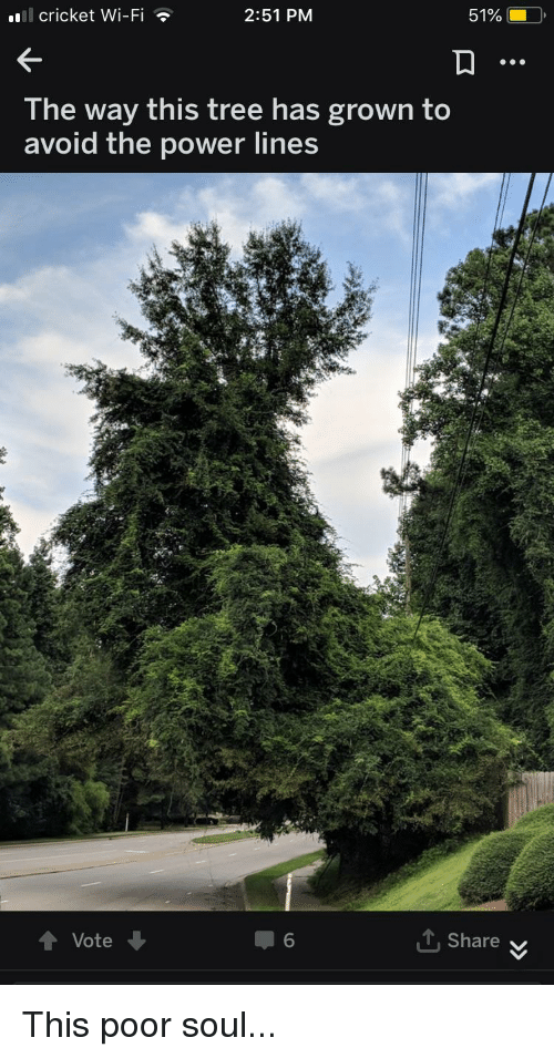 Facepalm, Cricket, and Power: 1111 cricket Wi-Fi  2:51 PM  The way this tree has grown to  avoid the power lines