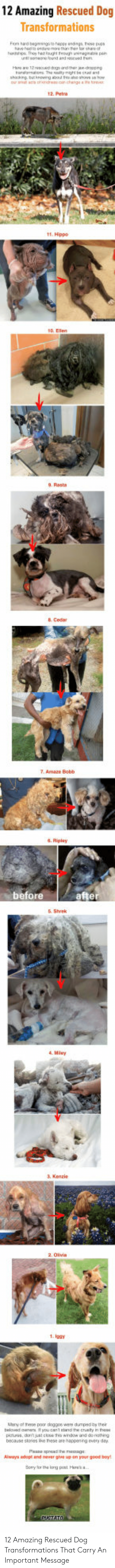 rasta: 12 Amazing Rescued Dog  Transformations  2wu  9. Rasta  Cedar  6. Ripley  before  afte  6 Shrek  & Kenzie  1. lagy  nese are happning every o  Aways edapl and ewer ge up on your good bey 12 Amazing Rescued Dog Transformations That Carry An Important Message