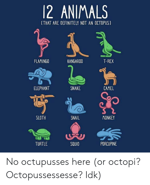 t rex: 12 ANIMALS  [THAT ARE DEFINITELY NOT AN OCTOPUS]  FLAMINGO  KANGAROO  T-REX  ELEPHANT  SNAKE  CAMEL  SLOTH  SNAIL  MONKEY  TURTLE  SQUID  PDRCUPINE No octupusses here (or octopi? Octopussessesse? Idk)