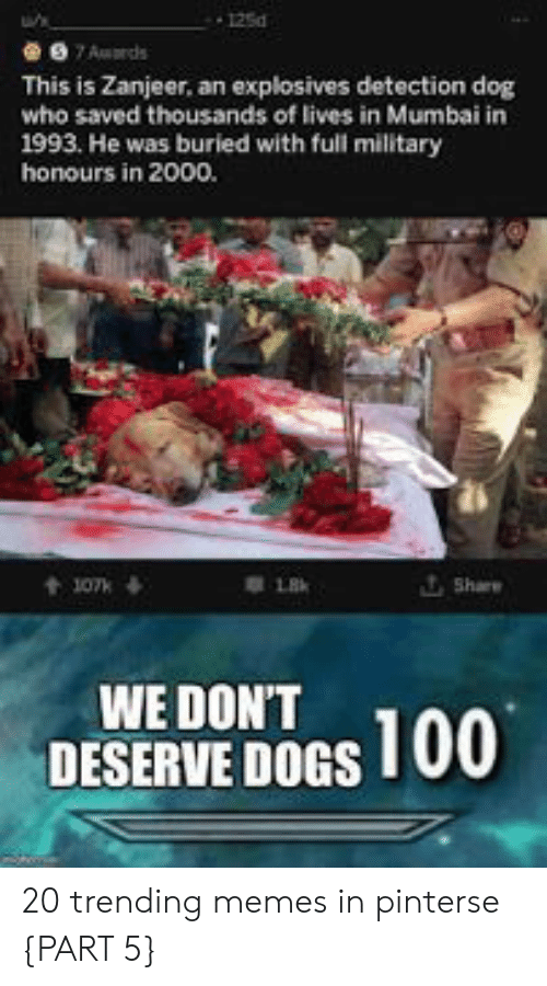 Part 5: 125d  7Auards  This is Zanjeer, an explosives detection dog  who saved thousands of lives in Mumbai in  1993. He was buried with full military  honours in 2000.  Share  t107k  WE DON'T  DESERVE DOGS 100 20 trending memes in pinterse {PART 5}