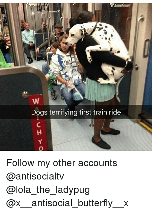 train ride: 13  Dogs terrifying first train ride Follow my other accounts @antisocialtv @lola_the_ladypug @x__antisocial_butterfly__x