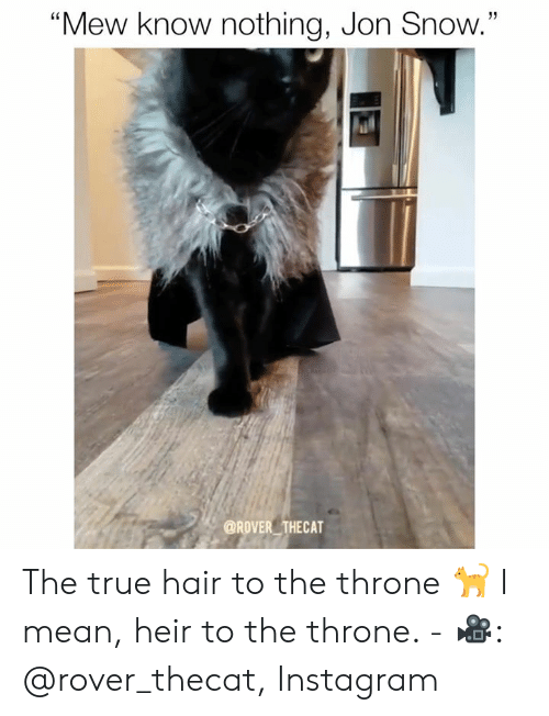 """Jon Snow: 13  """"Mew know nothing, Jon Snow.""""  @ROVER THECAT The true hair to the throne 🐈 I mean, heir to the throne.  - 🎥: @rover_thecat, Instagram"""