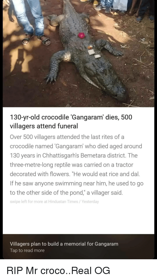"""villager: 130-yr-old crocodile 'Gangaram' dies, 500  villagers attend funeral  Over 500 villagers attended the last rites of a  crocodile named Gangaram' who died aged around  130 years in Chhattisgarh's Bemetara district. Thee  three-metre-long reptile was carried on a tractor  decorated with flowers. """"He would eat rice and dal.  If he saw anyone swimming near him, he used to go  to the other side of the pond,"""" a villager said.  swipe left for more at Hindustan Times/Yesterday  Villagers plan to build a memorial for Gangaram  Tap to read more RIP Mr croco..Real OG"""