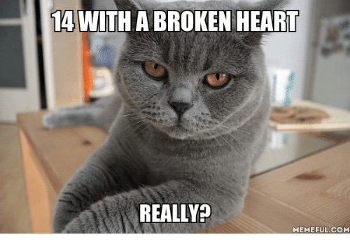 25+ Best Memes About Cat Saying Yes | Cat Saying Yes Memes