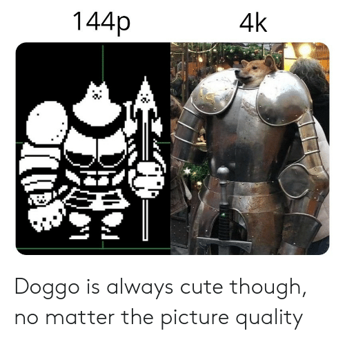 144P: 144p  4k  2. Doggo is always cute though, no matter the picture quality