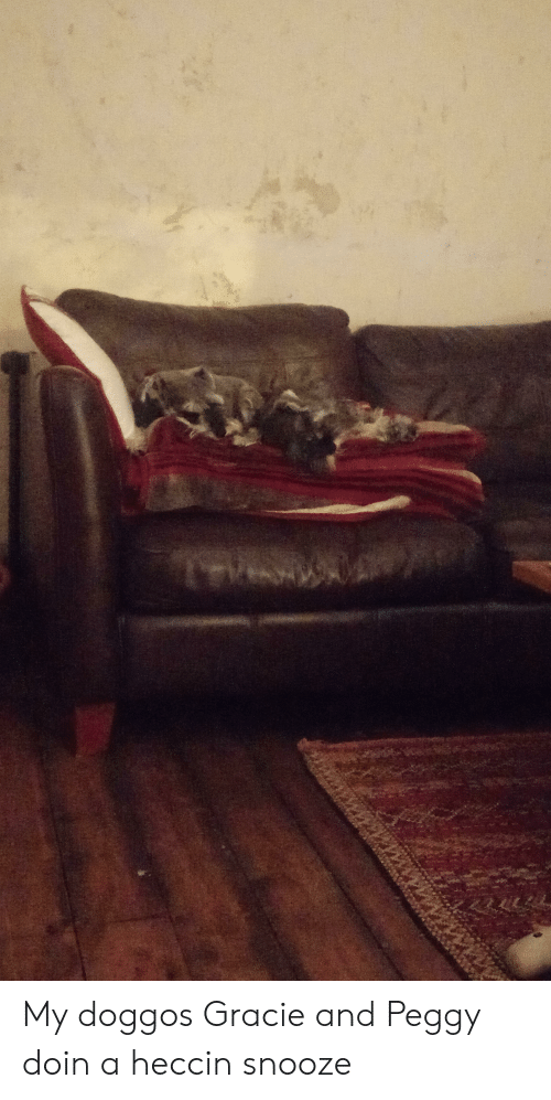 And Peggy: 14vn My doggos Gracie and Peggy doin a heccin snooze