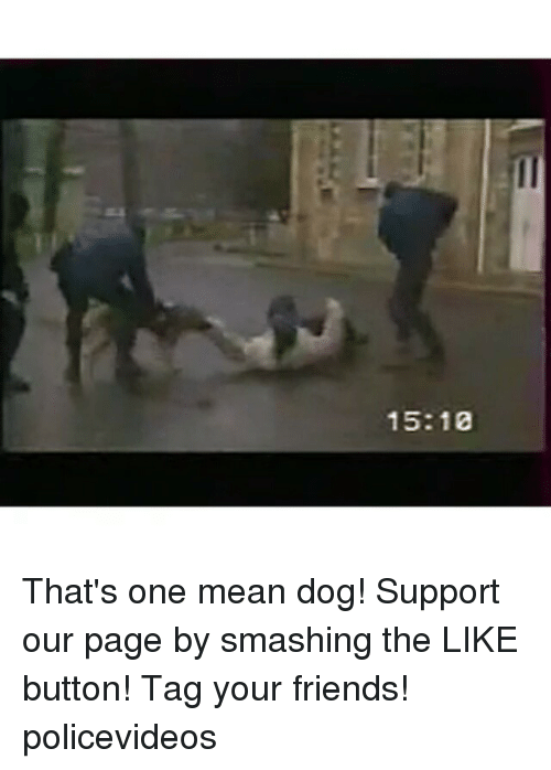 Tagged: 15:10 That's one mean dog! Support our page by smashing the LIKE button! Tag your friends! policevideos