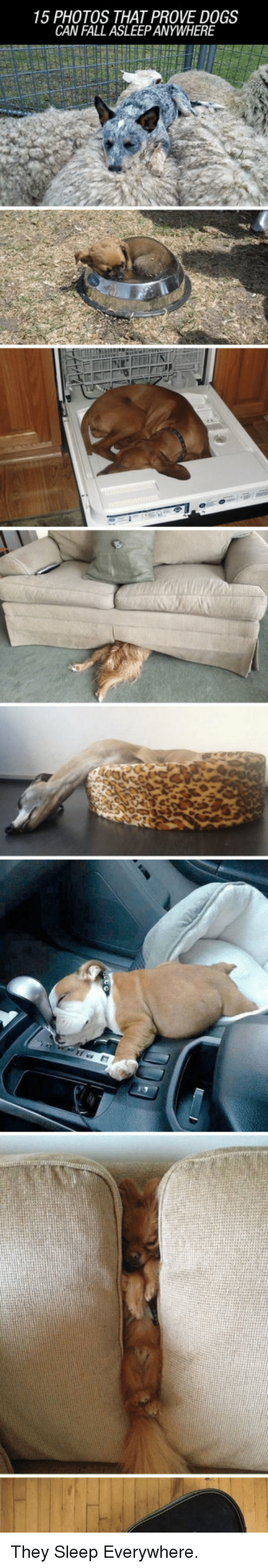 Dogs: 15 PHOTOS THAT PROVE DOGS  CAN FALL ASLEEP ANYWHERE <p>They Sleep Everywhere.</p>