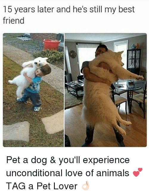 experience with my pet dog What happens when you leave pet dogs on their own  dawns on the doggo,  and it begins to experience considerable amounts of stress.