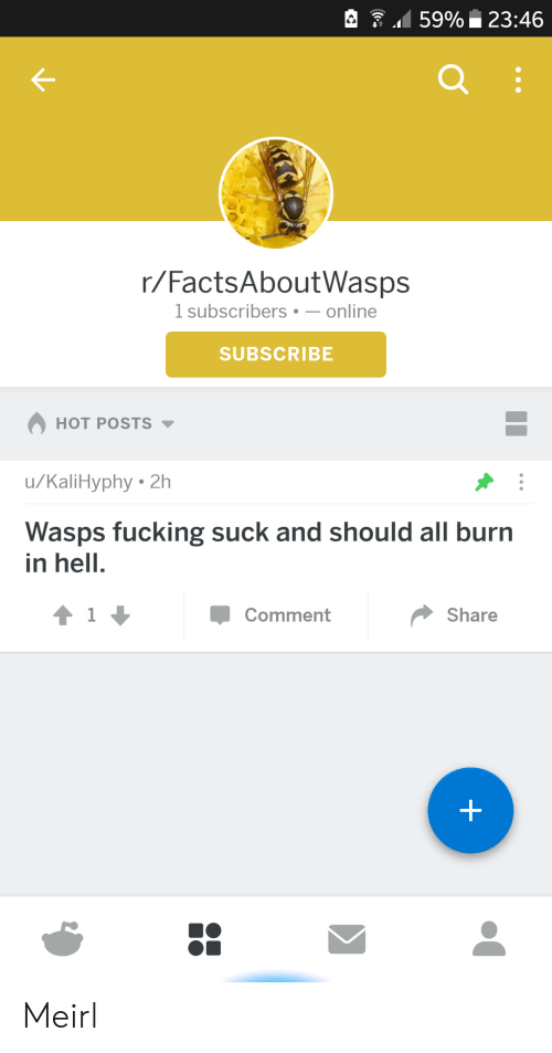wasps: 159% 23:46  r/FactsAboutWasps  1 subscribers-online  SUBSCRIBE  HOT POSTS  u/KaliHyphy 2h  Wasps fucking suck and should all burn  in hell.  Comment  Share Meirl