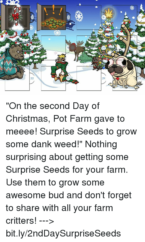 "pot: 16  17  25 ""On the second Day of Christmas, Pot Farm gave to meeee! Surprise Seeds to grow some dank weed!""   Nothing surprising about getting some Surprise Seeds for your farm. Use them to grow some awesome bud and don't forget to share with all your farm critters!  ---> bit.ly/2ndDaySurpriseSeeds"