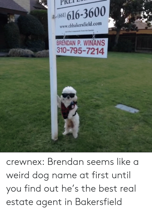 real estate agent: 160) 616-3600  www.cbakersfield.com  BRENDAN P. WINANS  310-795-7214 crewnex:  Brendan seems like a weird dog name at first until you find out he's the best real estate agent in Bakersfield