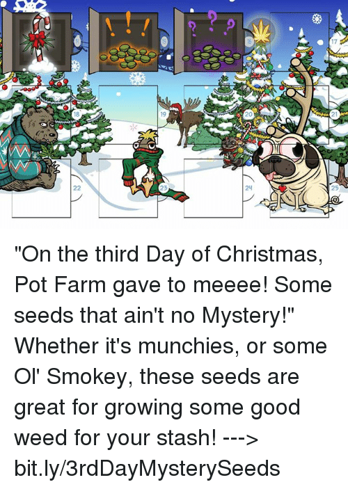 "pot: 17  1  24  22  9  U  V. ""On the third Day of Christmas, Pot Farm gave to meeee! Some seeds that ain't no Mystery!""   Whether it's munchies, or some Ol' Smokey, these seeds are great for growing some good weed for your stash!  ---> bit.ly/3rdDayMysterySeeds"