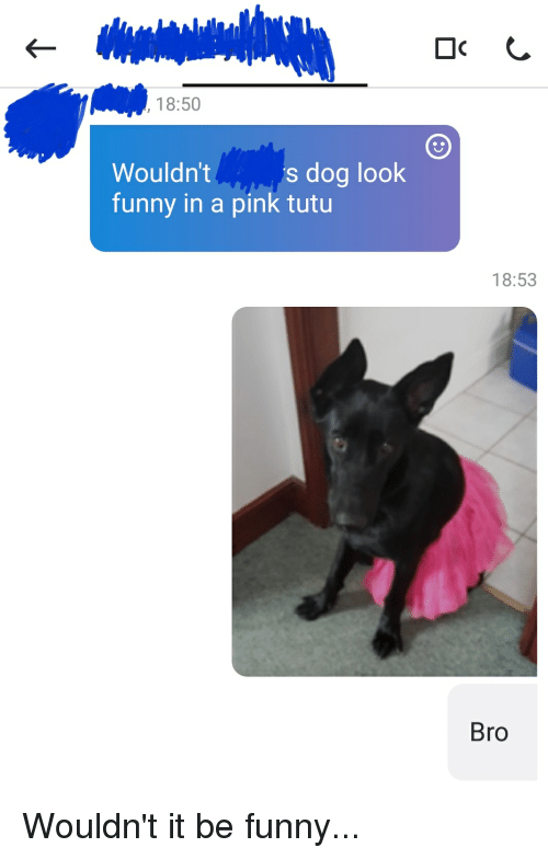 Funny Dog Memes Reddit : Wouldn t funny in a pink tutu s dog look bro