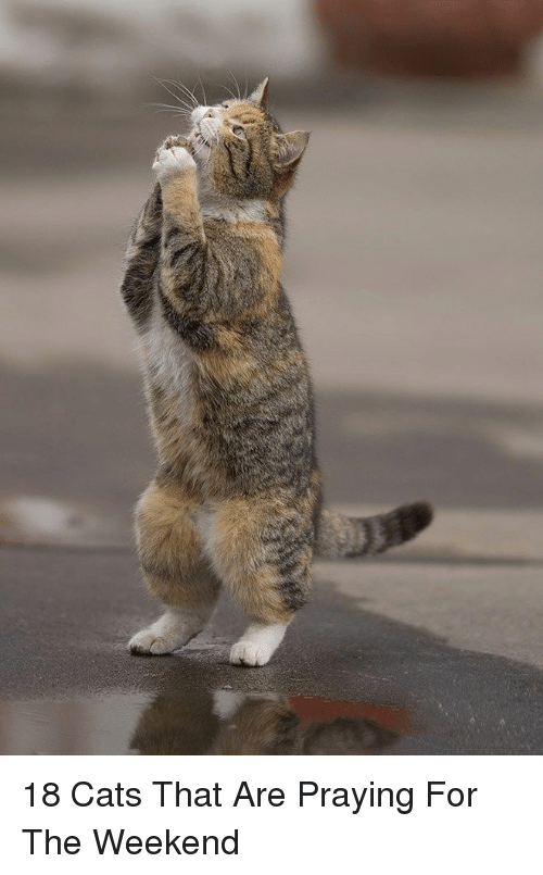Cats, The Weekend, and Weekend: 18 Cats That Are Praying For The Weekend