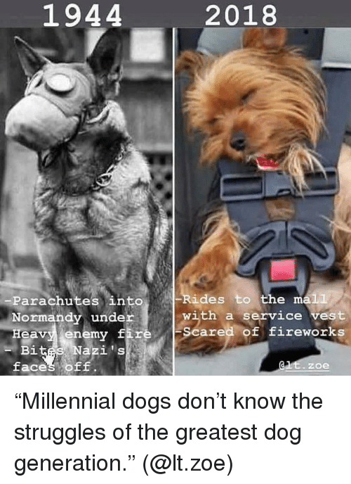 """Fiz: 1944  2018  Rides to the ma1L  -Parachutes into  Normandy under  Heavy enemy fiz  with a service vest  Scared of fireworks  i t  faces OF  -B  Nazis  zoe """"Millennial dogs don't know the struggles of the greatest dog generation."""" (@lt.zoe)"""