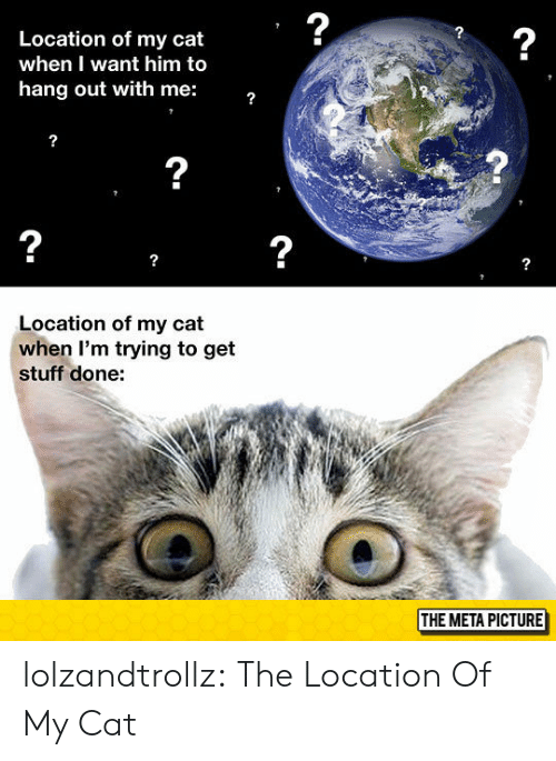 Want Him: 2  2  Location of my cat  when I want him to  hang out with me:  2  2  2  Location of my cat  when I'm trying to get  stuff done:  THE META PICTURE lolzandtrollz:  The Location Of My Cat