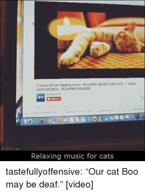 "Cato: 2 Hours of cat sieeping music RELAXING MUSIC FOR CATS 2 HORA  CATO MÜSICA RELAXING SOUNDS  4GIFs.com  Relaxing music for cats tastefullyoffensive:  ""Our cat Boo may be deaf."" [video]"