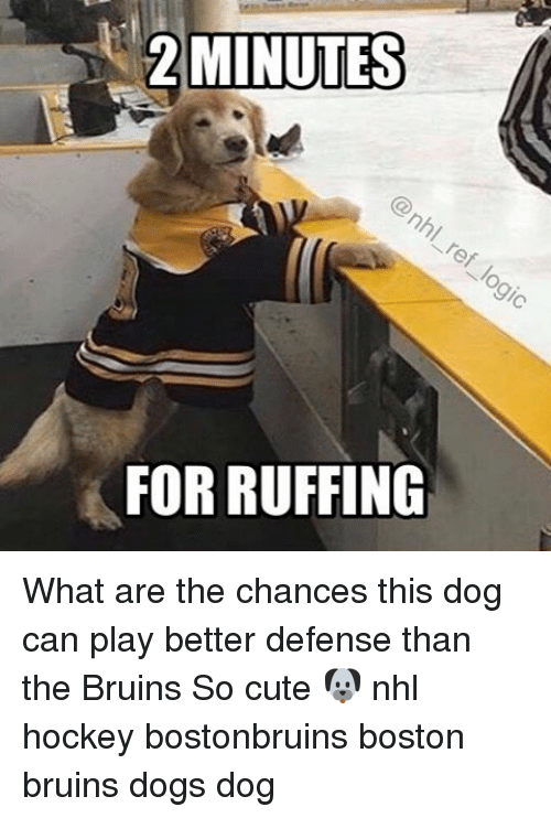 bruin: 2 MINUTES  FOR RUFFING What are the chances this dog can play better defense than the Bruins So cute 🐶 nhl hockey bostonbruins boston bruins dogs dog