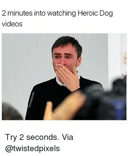 dog videos: 2 minutes into watching Heroic Dog  videos Try 2 seconds. Via @twistedpixels