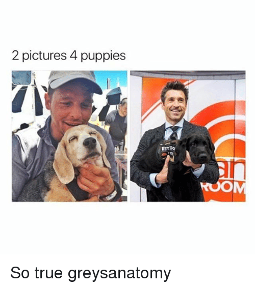 Memes, Puppies, and True: 2 pictures 4 puppies  VETDQ So true greysanatomy