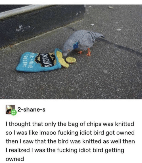 Shane: 2-shane-s  I thought that only the bag of chips was knitted  so I was like Imaoo fucking idiot bird got owned  then I saw that the bird was knitted as well then  I realized I was the fucking idiot bird getting  owned  pecal's