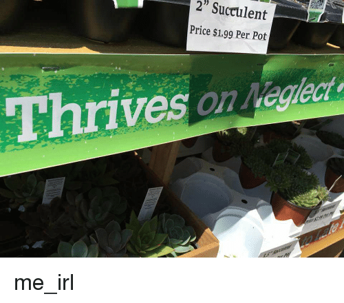 "Irl, Me IRL, and Pot: 2"" Succulent  Price $1.99 Per Pot  Thrives on Negleet me_irl"
