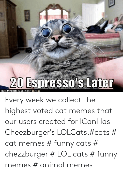 LOLcats: 20 Espresso's Later  IGAN HAS CHEEZBURGER,00M Every week we collect the highest voted cat memes that our users created for ICanHas Cheezburger's LOLCats.#cats # cat memes # funny cats # chezzburger # LOL cats # funny memes # animal memes