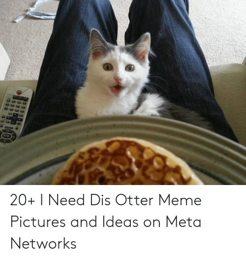 Need Dis Otter: 20+ I Need Dis Otter Meme Pictures and Ideas on Meta Networks