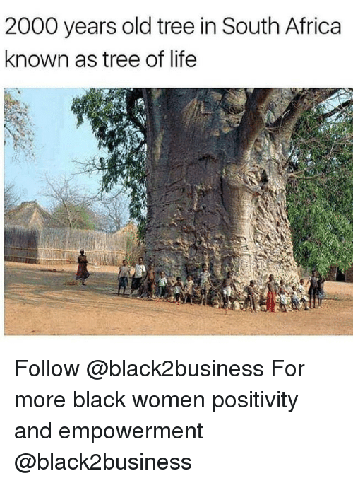 Africa, Life, and Memes: 2000 years old tree in South Africa  known as tree of life Follow @black2business For more black women positivity and empowerment @black2business