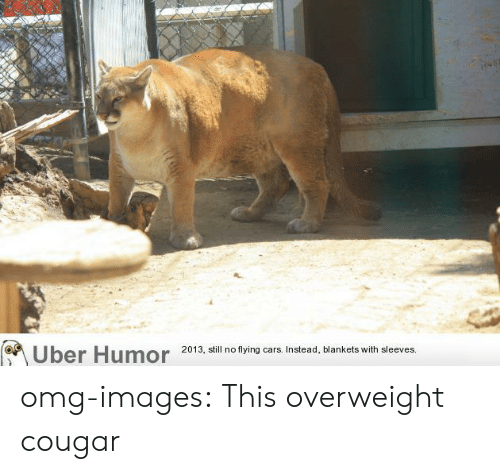 Cougared: 2013, still no flying cars. Instead, blankets with sleeves. omg-images:  This overweight cougar